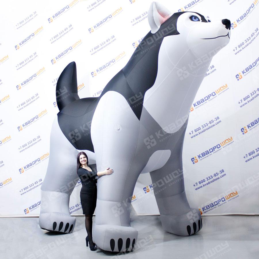 Огромная надувная Собака хаски
