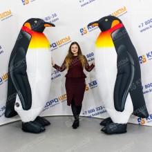 огромные надувные пингвины