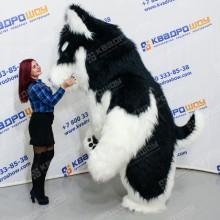 Надувной костюм собака Хаски