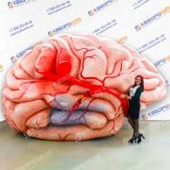 Надувная копия Человеческий мозг