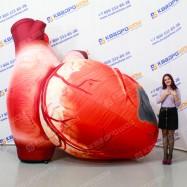 Надувная конструкция сердце человека