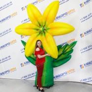 Огромный пневмоцветок жёлтая лилия