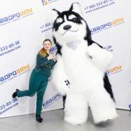 ростовой костюм собака хаски для аниматора