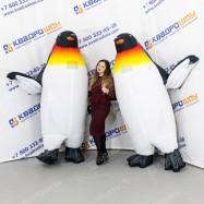 ростовые куклы костюмы пингвинов