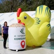 Надувная курица для рекламы комбикорма