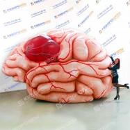 Надувная фигура Мозг человека