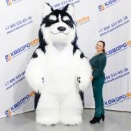 ростовой плюшевый костюм собака хаски
