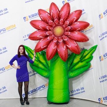 Надувной огромный цветок Хризантема