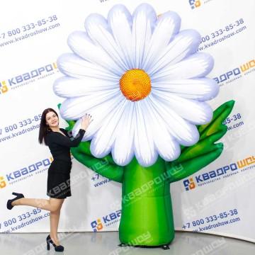 Воздушный цветок белая ромашка