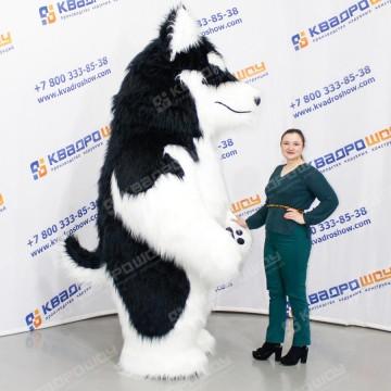 надувной костюм для человека собака хаски