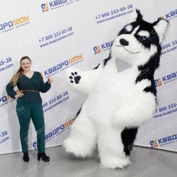 надувной костюм собака хаски для взрослого